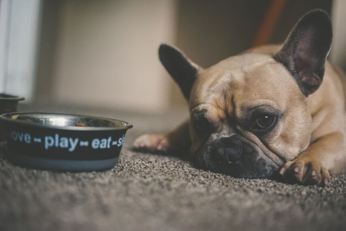 HOW MUCH SHOULD I FEED MY PUPPY (DOG) | FEEDING TIPS FROM PUPPY TO GROWN UP DOG